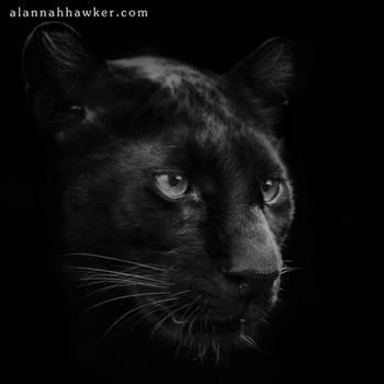 Mystique by Alannah-Hawker