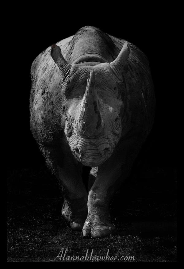 Rhino by Alannah-Hawker