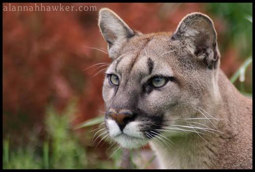 Puma 01 by Alannah-Hawker