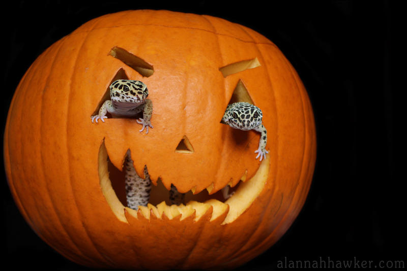 Happy Halloween by Alannah-Hawker