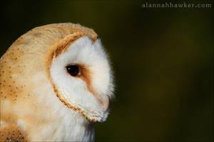 Bawn Owl by Alannah-Hawker