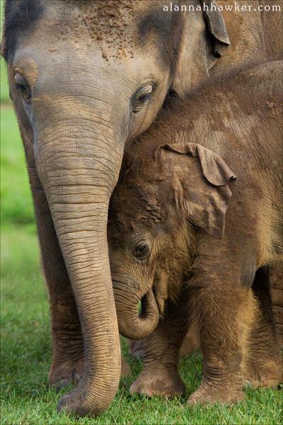 Sibling Love VI by Alannah-Hawker