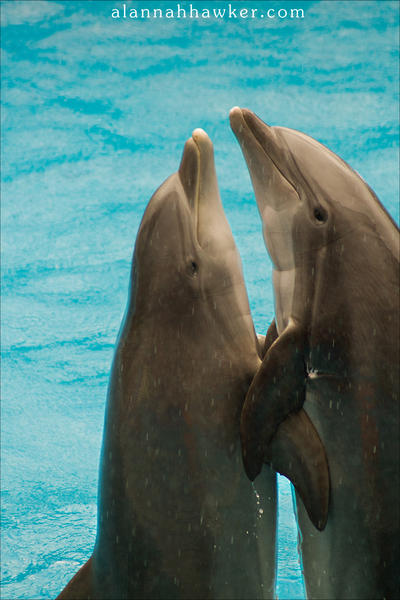 Dolphins by Alannah-Hawker