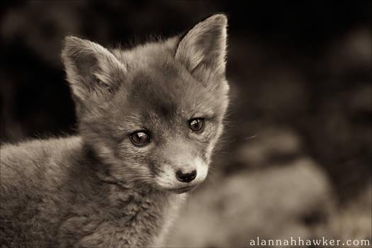 Fox Cub 18