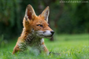 Proud by Alannah-Hawker