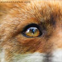 Soulful Eyes by Alannah-Hawker