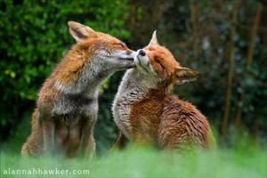 Foxy Kisses by Alannah-Hawker