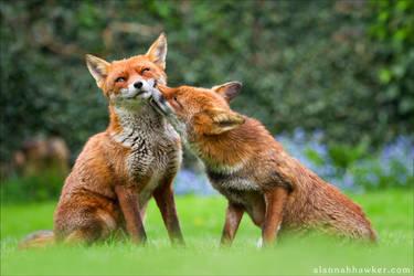 Foxy Kisses 2 by Alannah-Hawker