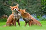Foxy Kisses 2