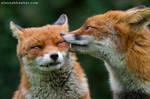 Foxy Kisses 3