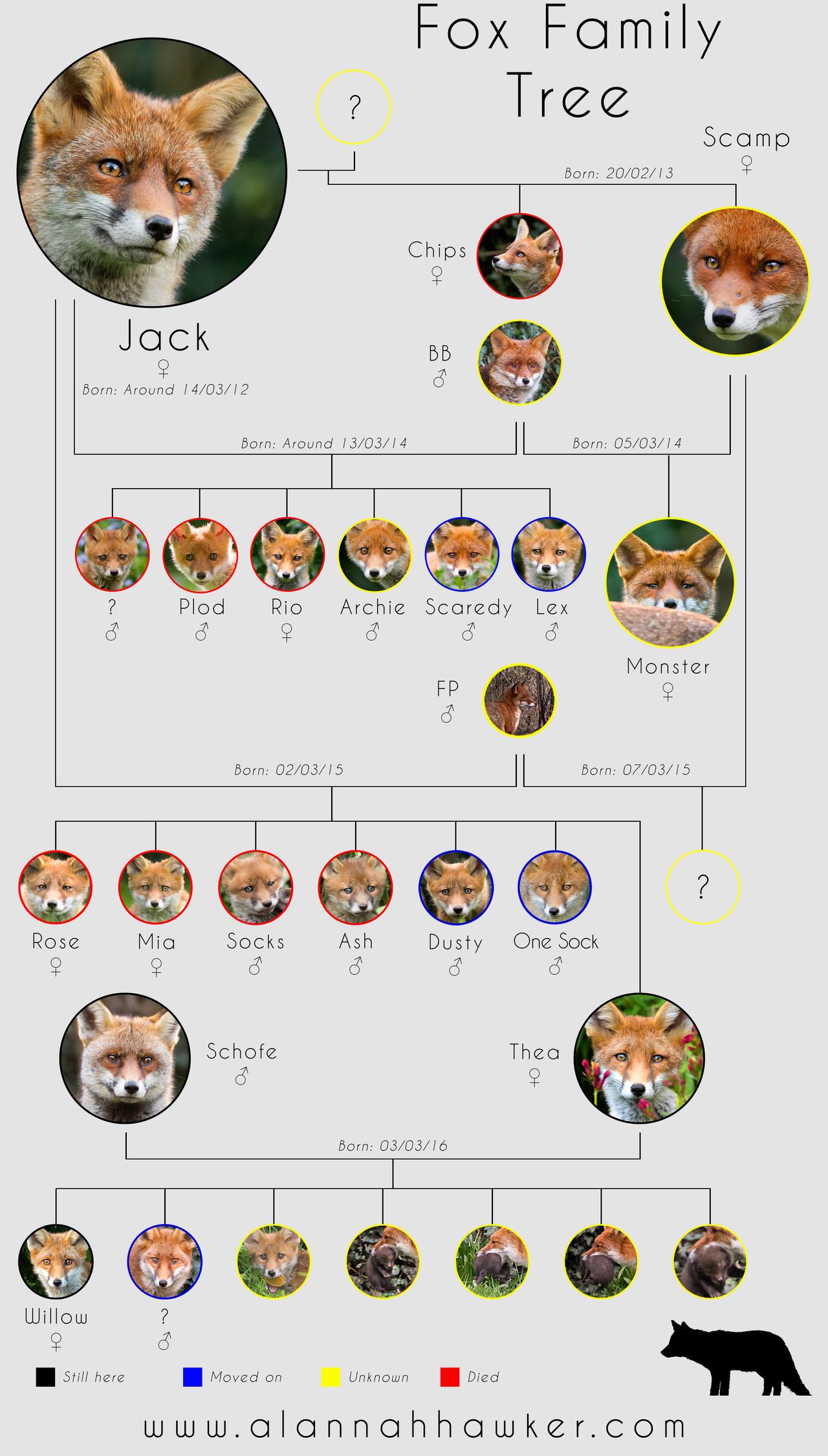 Fox Family Tree by Alannah-Hawker