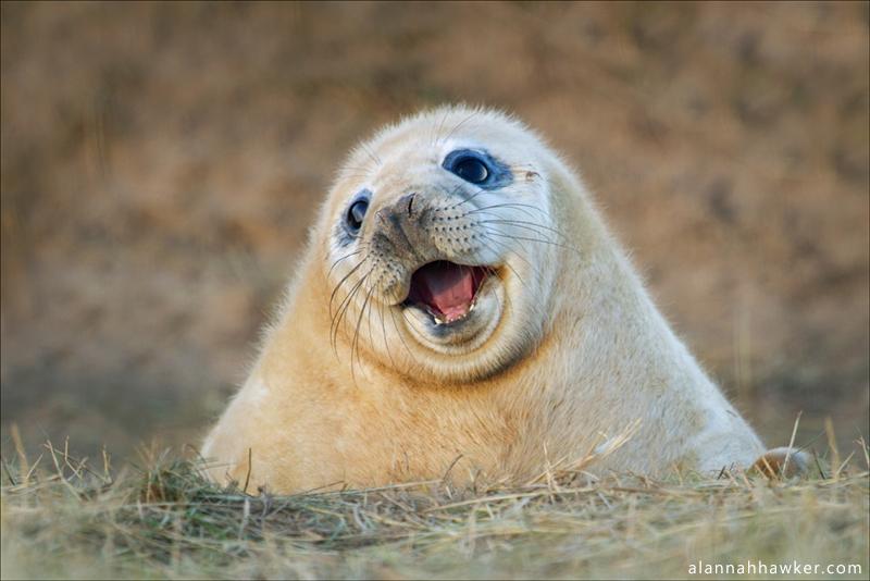 Oh, hi! by Alannah-Hawker