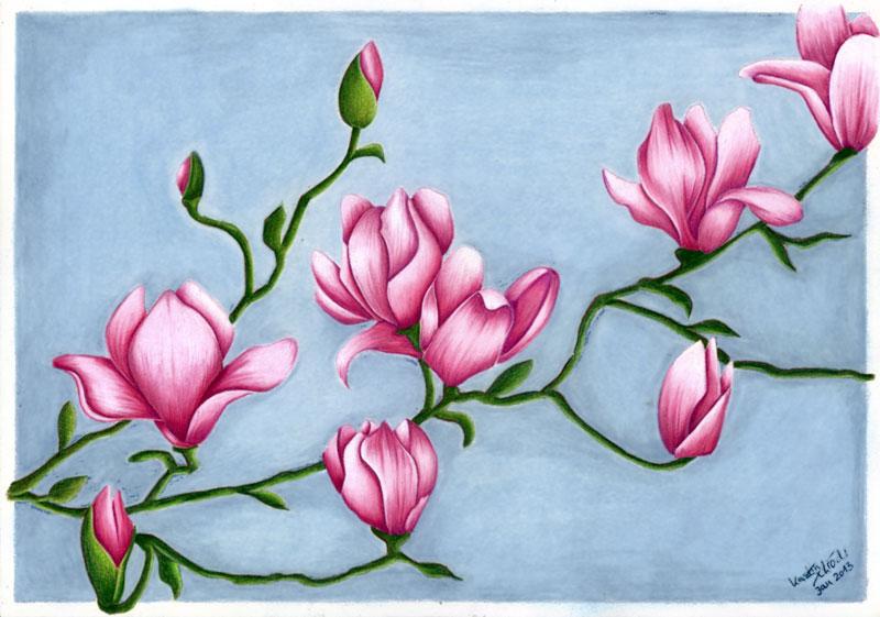 Magnolia by KerstinSchroeder