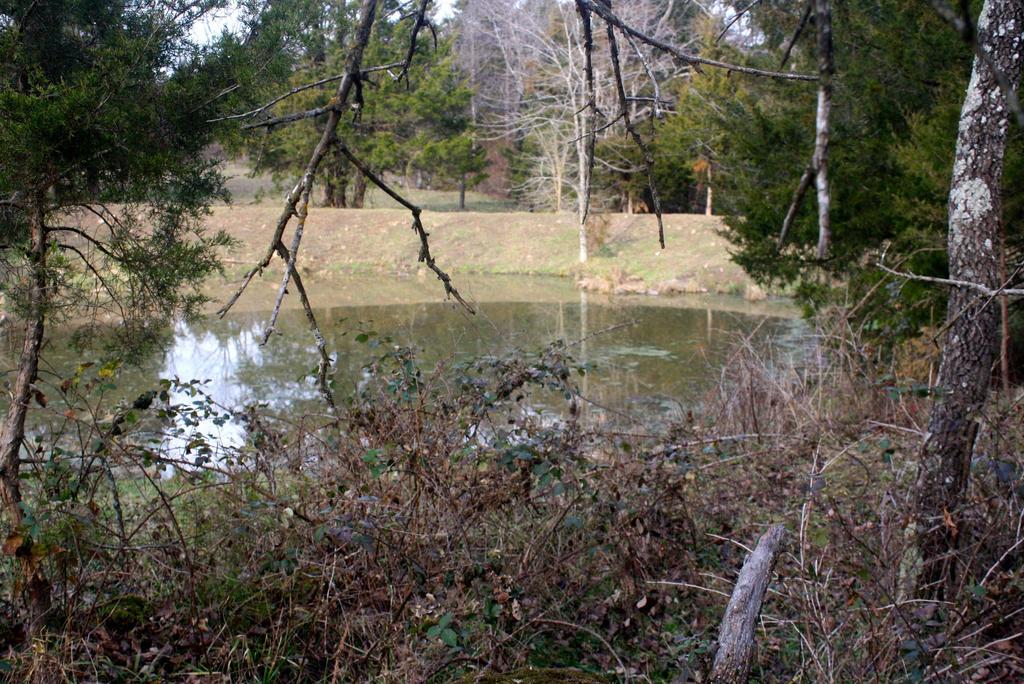 Pond by followerofgod