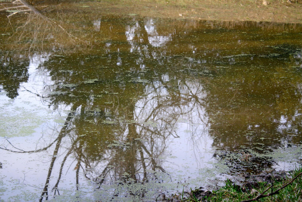 Pond Reflection by followerofgod