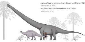 Mamenchisaurus vs. Brachytrachelopan