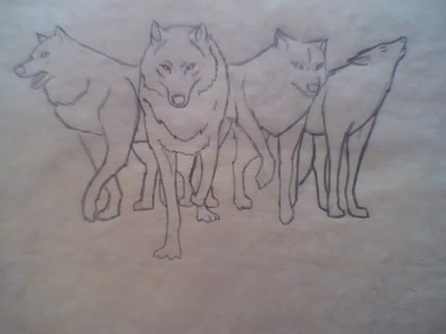 Lineart Wolf Tattoo : Wolves tattoo design line art by toboe123 on deviantart