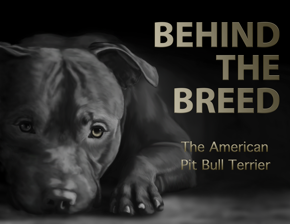 The American Pit Bull Terrier by L-Young