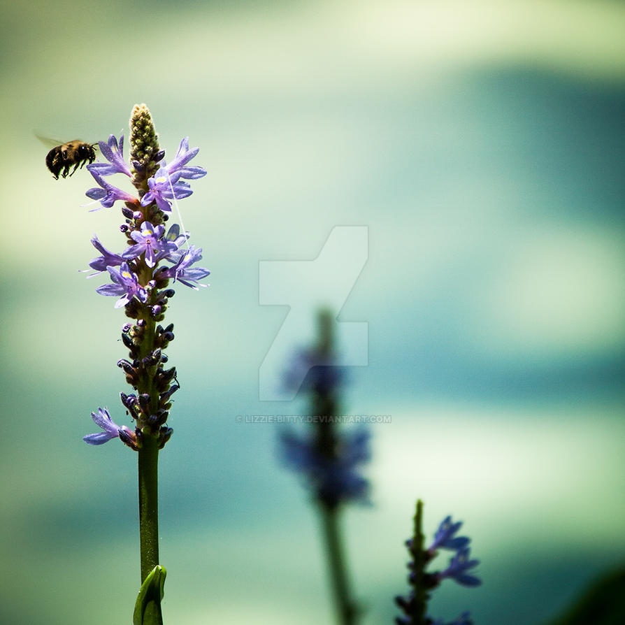Bee Gathering Blue by Lizzie-Bitty