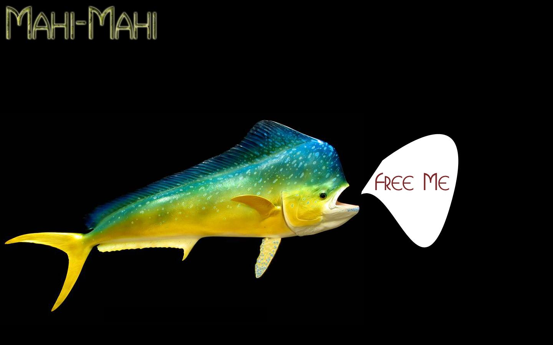 Free Mahi-Mahi by craz3 on DeviantArt
