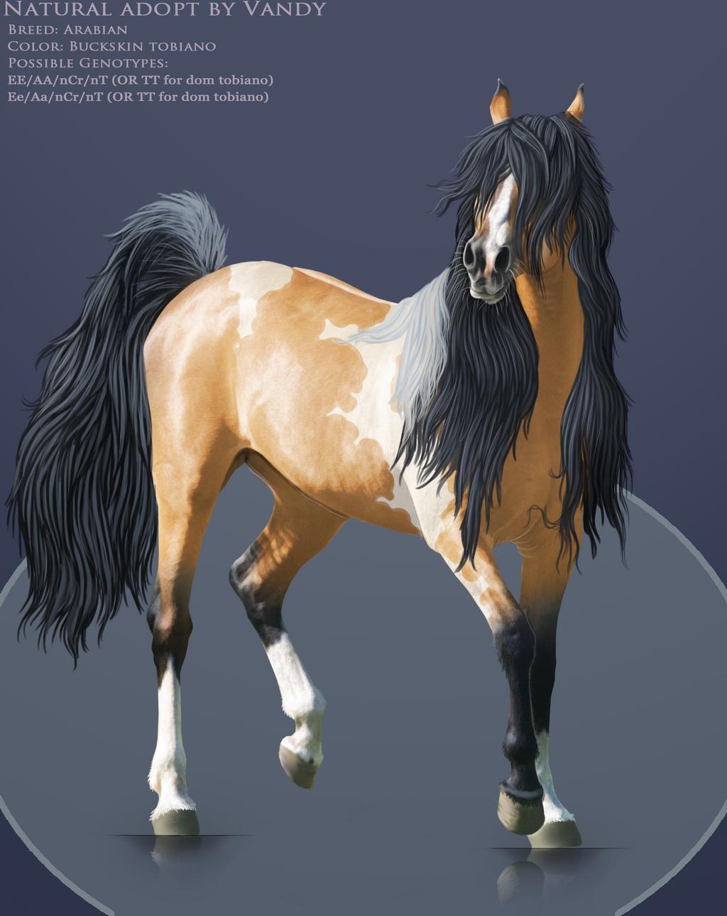 Buckskin tobiano horse