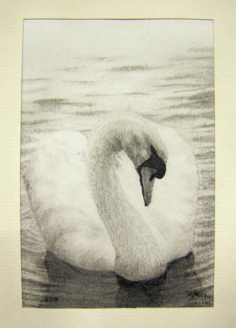 Swan by Vytenis62