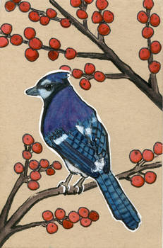 Blue Jay and Red Berries