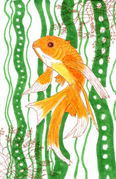 Goldfish and Kelp