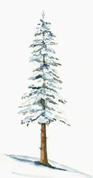 Snowy Pine Study by Jlombardi