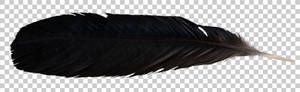 Raven feather PNG