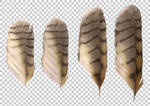 Long-eared owl feathers PNG