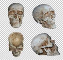 Human skull ornament PNG by raduluchian