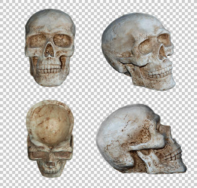 Human skull ornament PNG