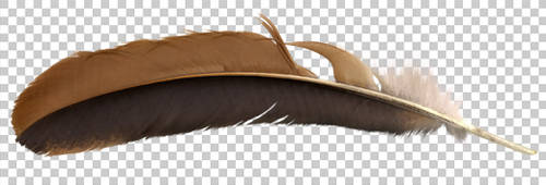 Chicken feather PNG
