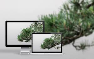 Pinus by raduluchian
