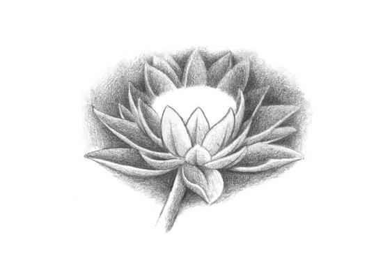 Lotus flower by tatosXL