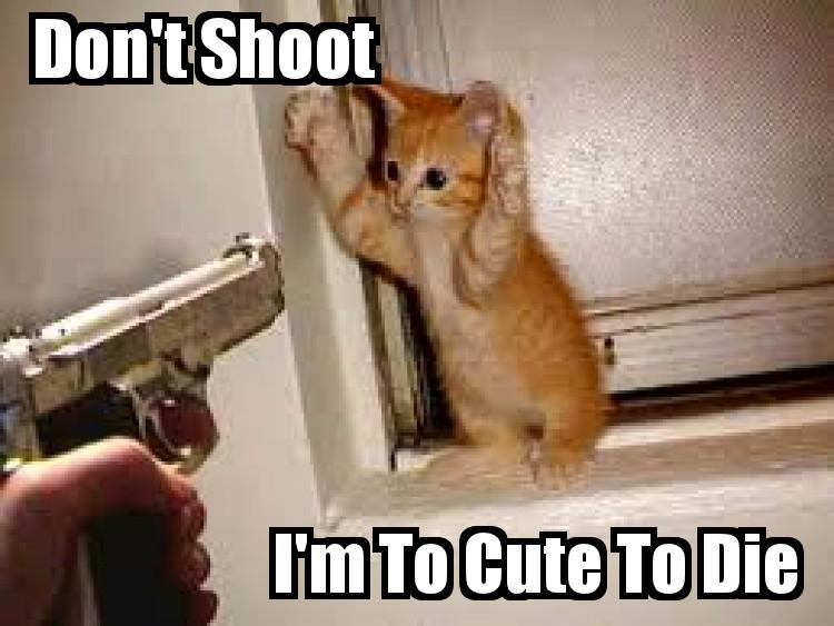 Funny Cat 4 by JessieTheTigger