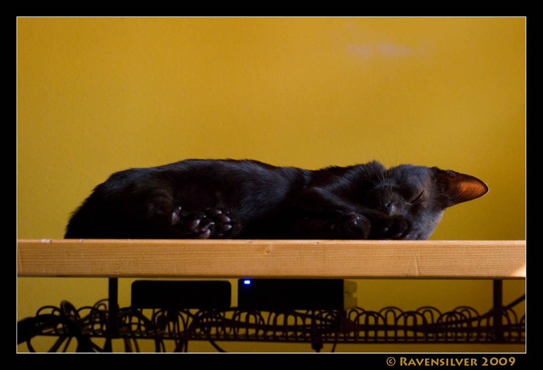 Oskar the office cat by Ravensilver