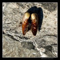 Petrified Wings by Ravensilver