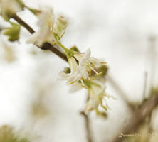 Spring Breeze by Ravensilver