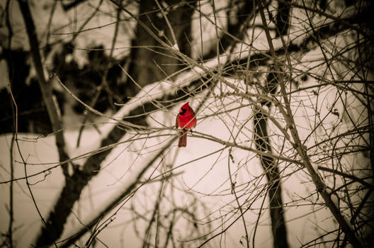 Alone in Winter