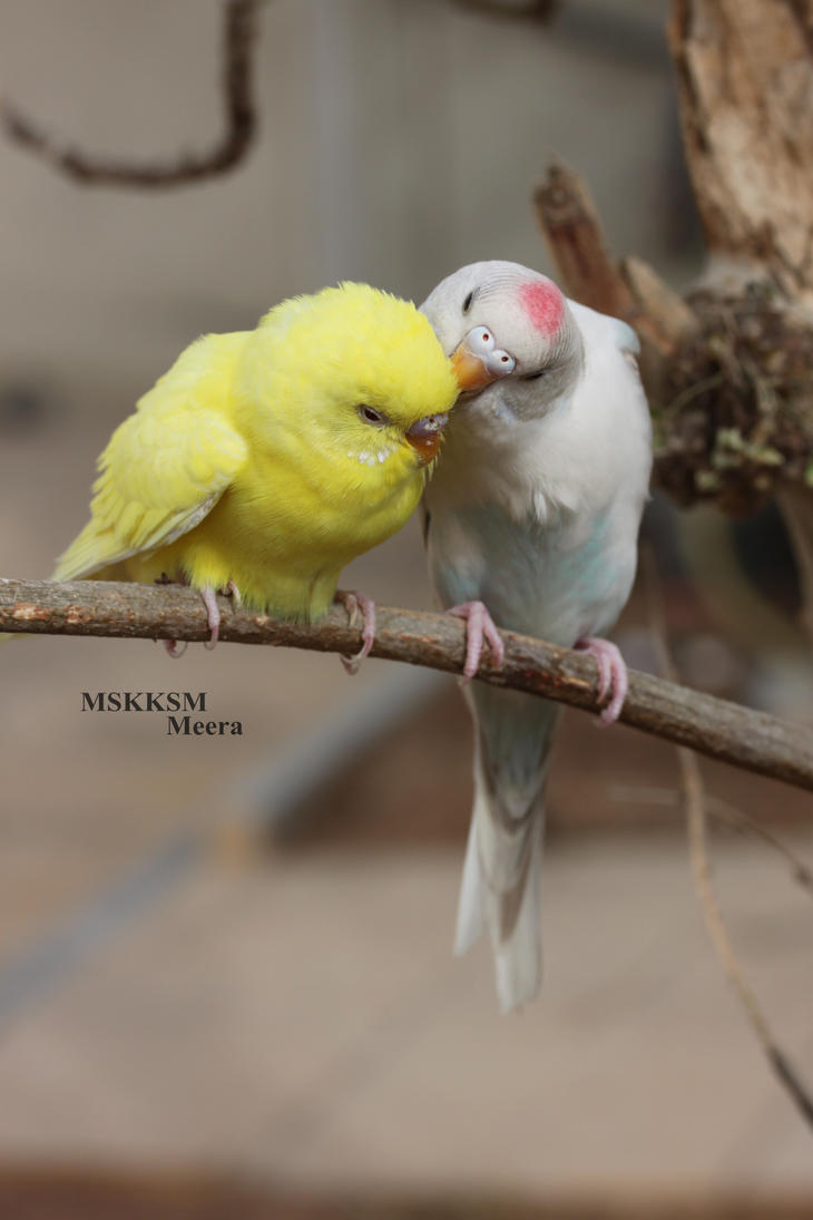 Love birds by MSK-KSM