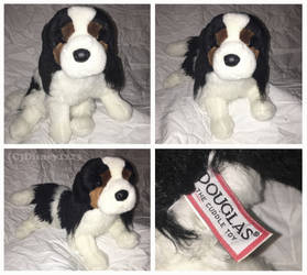 Douglas Medium Floppy Dogs- Royal Cavalier