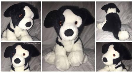 Douglas Oversized Sitting Pup-Amelia Border Collie