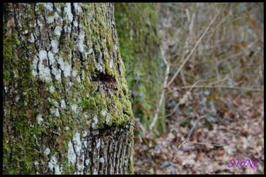Les arbres sont en colere by Crowlf