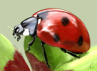 Coccinelle by NorethNo