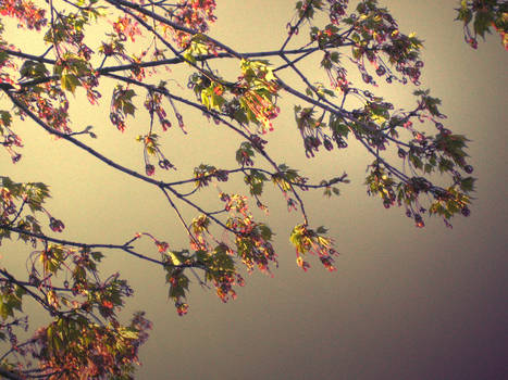 Tree in the sky