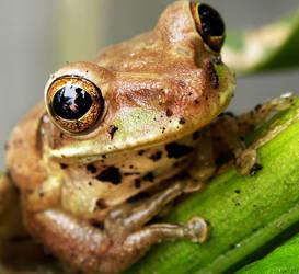 Tree Frog Self Portrait by flowerhippie22