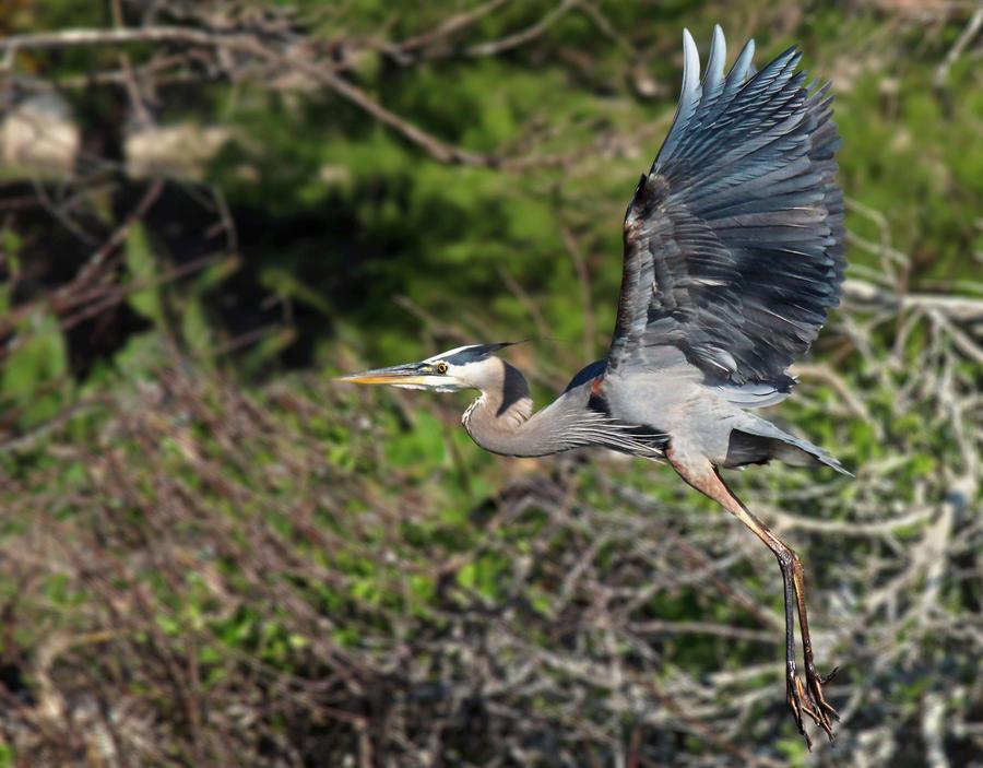 GBH In Flight by flowerhippie22
