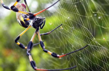 Arachnophobia by flowerhippie22